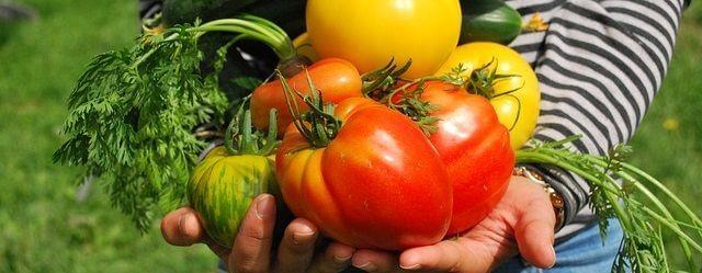 副業農業で稼げるおすすめの作物
